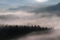Saxony Switzerland park Royalty Free Stock Images