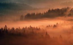 Saxony Switzerland park Stock Image
