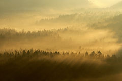 Saxony Switzerland park Royalty Free Stock Photography