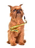 Saxophonist dog Royalty Free Stock Photo