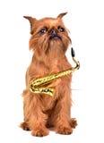 Saxophonisthund lizenzfreies stockfoto