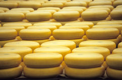 Say Cheese. Stacks of waxed wheels of Gouda cheese at the Alkmaar cheese market Stock Image