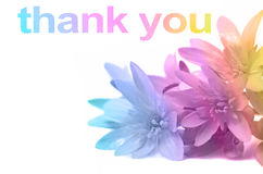 Say thank you with Flowers. Soft pastel rainbow colors applied to close up of daisies in right corner and THANK YOU words above with copy space stock photos