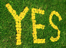 Say yes Stock Photos