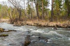 Sayan. Stream Uy. Sayan taiga. Stream Uy, a tributary of the yenisei. Khakassia. Siberia Royalty Free Stock Image