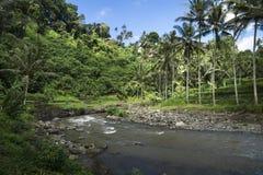 Sayan-Terrassen mit Fluss, terassenförmig angelegte ricefields, Ubud, Bali, Indonesien Stockbilder