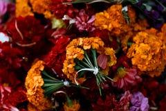 Sayapatri. Indian Flowers Sayapatri for pudja Royalty Free Stock Image