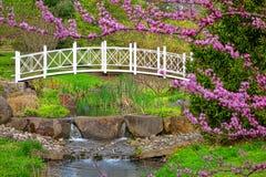 Sayen parkerar den dekorativa bron för botaniska trädgårdar Arkivfoton