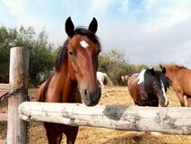 Saying hi to the horses Stock Photography