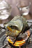 Sazae żadny tsuboyaki, piec na grillu rogata turban skorupa Obrazy Stock