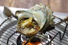 Sazae żadny tsuboyaki, piec na grillu rogata turban skorupa Zdjęcie Stock