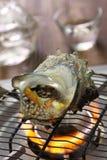 Sazae no tsuboyaki, grilled horned turban shell Stock Images