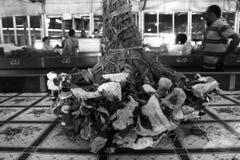 Sazone las raíces de la planta con pimienta para la venta en mercado del Fijian imagen de archivo libre de regalías