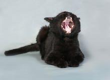 Sbadigli del gatto nero, bugie su gray Immagine Stock Libera da Diritti