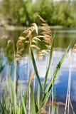 Sbalzi nel lago Immagine Stock Libera da Diritti