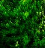 Sbalzo verde #3 Fotografie Stock