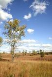 Sbarchi dell'erba asciutta Fotografie Stock
