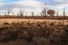 Sbarco asciutto duro nella siccità Fotografia Stock