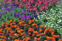 Sbarco del mare dei fiori Fotografia Stock Libera da Diritti