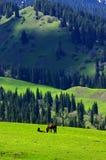 Sbarco dell'erba in Xinjiang Fotografie Stock