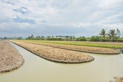 Sbarco della preparazione del terreno per coltura di verdure fotografie stock libere da diritti