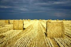 Sbarco di agricoltura con i rulli della paglia Fotografia Stock Libera da Diritti