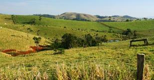Sbarco di azienda agricola del bestiame Immagine Stock Libera da Diritti