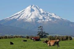 Sbarco di Mt Taranaki e dell'azienda agricola Fotografie Stock Libere da Diritti