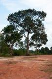 Sbarco ed albero Immagine Stock