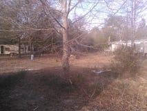 Sbarco ed albero Fotografia Stock