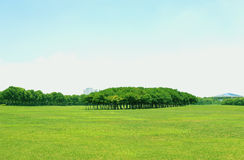 Sbarco verde Fotografia Stock