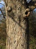 Sbattere le palpebre albero Fotografie Stock