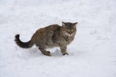 Sbattere le palpebre gatto Fotografia Stock