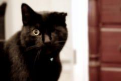 Sbattere le palpebre gatto immagine stock libera da diritti