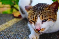 Sbattere le palpebre gatto Immagini Stock Libere da Diritti