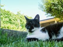 Sbattere le palpebre gatto Immagine Stock