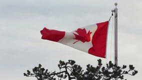 Sbattimento canadese della bandiera, giorno ventilato video d archivio