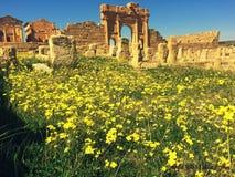 sbeitla,春天,罗马废墟 免版税库存图片