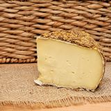 Sbirro type of italian cheese. Sbarro cheese with grain encrusted surface typical italian fashion natural aging Stock Photography