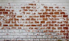 Sbucciatura bianca dipinta come vecchio muro di mattoni rosso immagine stock libera da diritti