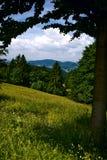 Scène 6 de forêt Photos stock