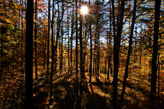 Scène 8562 van de Herfst van Pennsylvania Stock Afbeeldingen