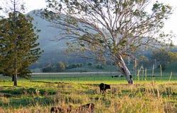 Scène agricole rurale australienne de campagne de début de la matinée Photographie stock