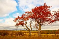Scène automnale merveilleuse avec des zones et des arbres. image stock