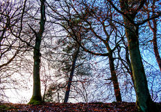 Scène avec l'arbre rétro-éclairé II Photo libre de droits