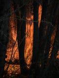 Scène avec la végétation brûlante et les arbres de grandes flammes dans un incendie de forêt photographie stock libre de droits