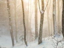 Scène brumeuse de forêt de hêtre de l'hiver Image libre de droits