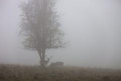 Scène brumeuse de nature Images libres de droits