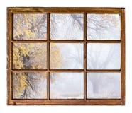 Scène brumeuse de parc d'automne images stock