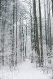 Scène brumeuse et gelée magique de forêt d'hiver Dos brumeux de paysage Photos libres de droits